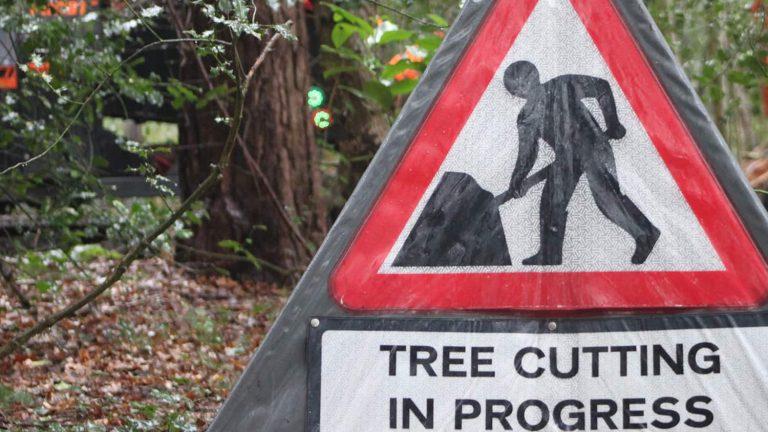 Choosing the right trees surgeon
