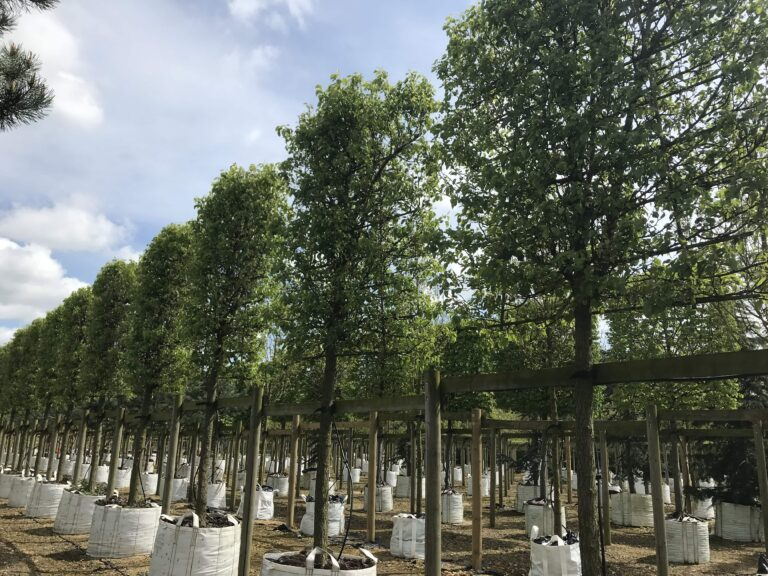 Tree selection