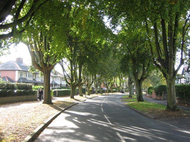 iTree Urban Trees